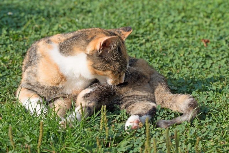 Haarballen bei Katzen – So helfen Sie Ihrem Tier