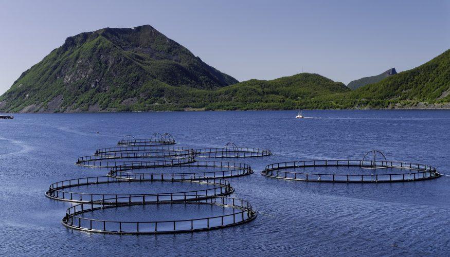 Fisch aus Aquakulturen – Gute Alternative zu Wildfisch?