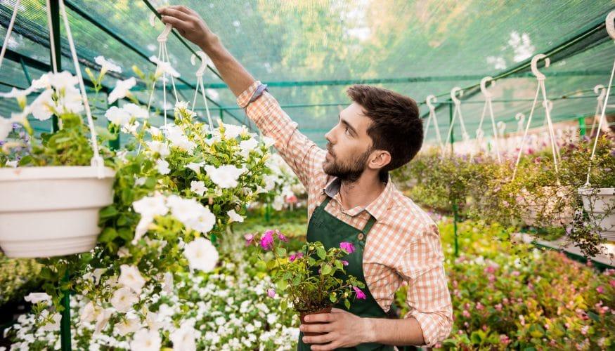 Blütenstaub entfernen – Schritt für Schritt Anleitung