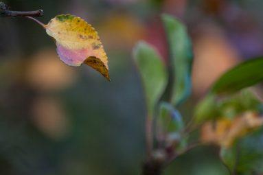 Pflanzen Zur Luftbefeuchtung : pflanzen tipps rund um blumen und zimmerpflanzen ~ Sanjose-hotels-ca.com Haus und Dekorationen