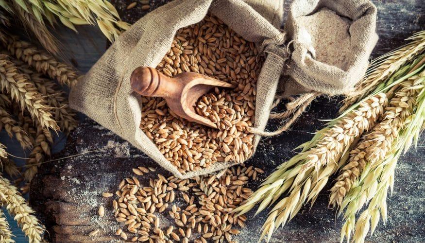 1er-Glas Getreidespender von Hawos