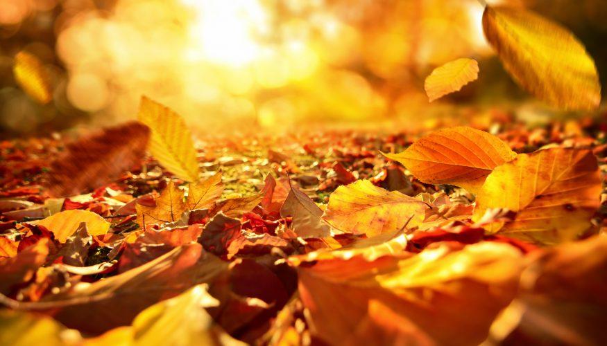 Werden Blätter im Herbst tatsächlich bunt?