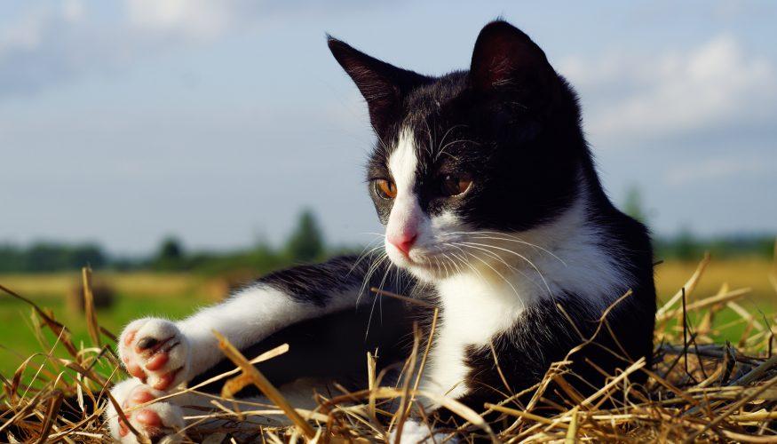 Katze erbricht – Was bedeutet das?