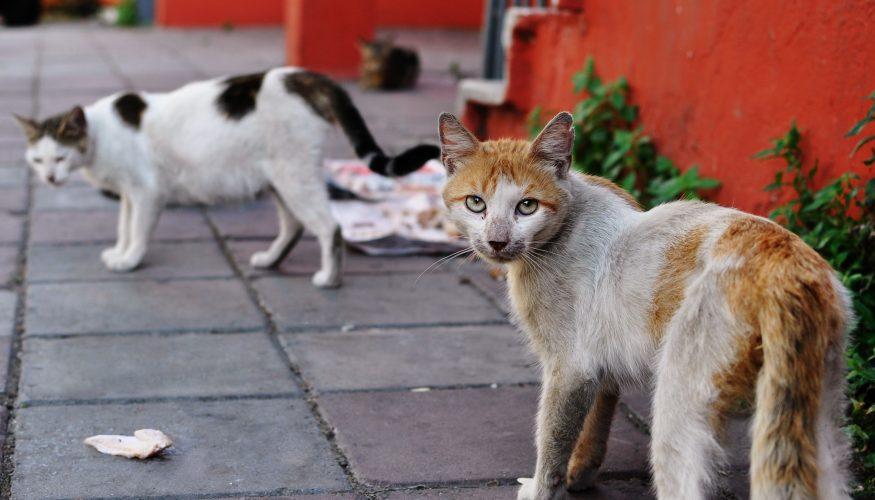 Katzen verscheuchen – 8 Tipps