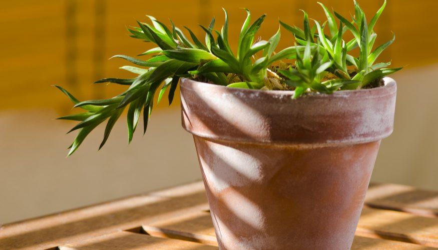 pflanzen drehen f r gleichm iges wachstum ist das sinnvoll. Black Bedroom Furniture Sets. Home Design Ideas