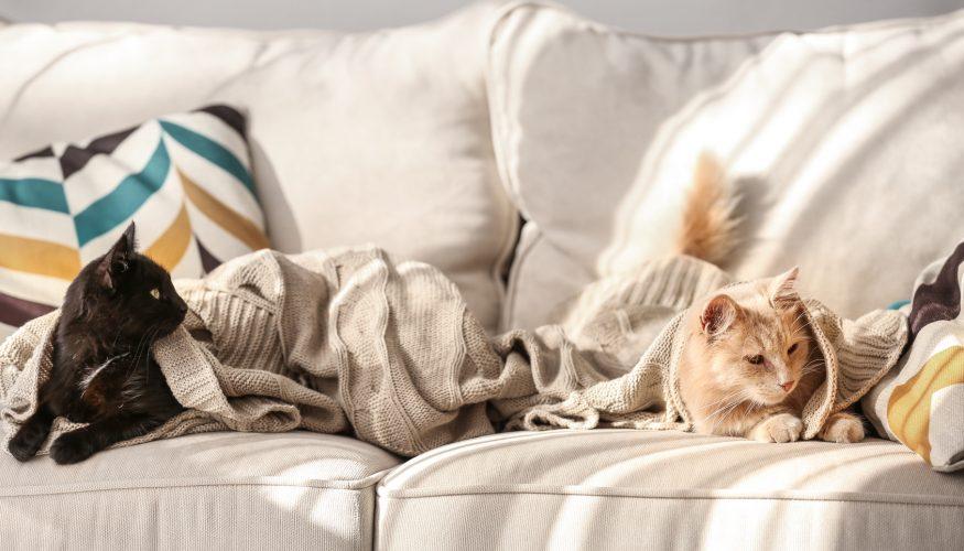 Polstermöbel reinigen – 3 Tipps & Tricks!