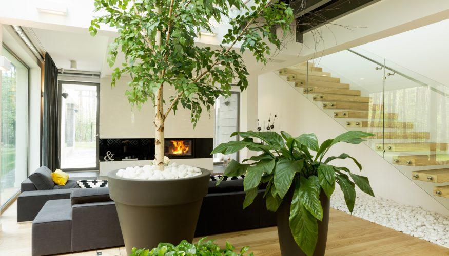 raumklima verbessern mit diesen pflanzen klappt 39 s. Black Bedroom Furniture Sets. Home Design Ideas