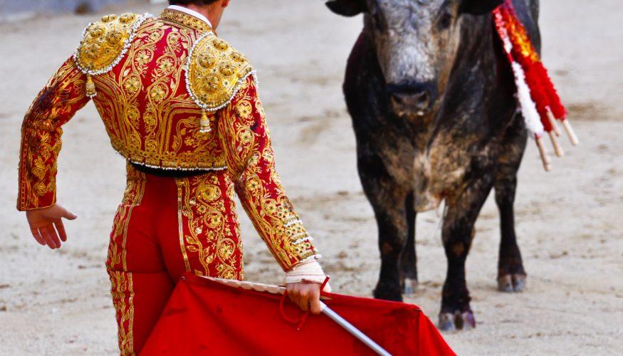 Macht ein rotes Tuch Stiere wild?
