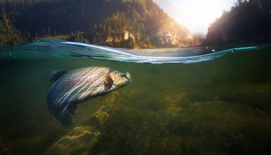 Wächst Wildwasserlachs natürlich auf?