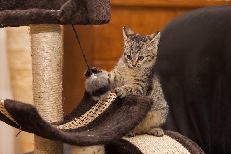 Katze bei Abwesenheit beschäftigen – 5 Tipps gegen Langeweile