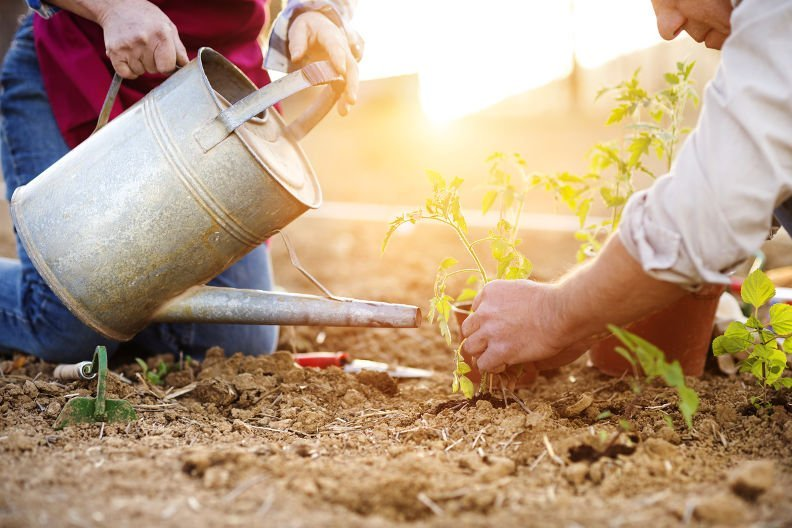 Kompostsud herstellen – So bleiben Ihre Pflanzen gesund