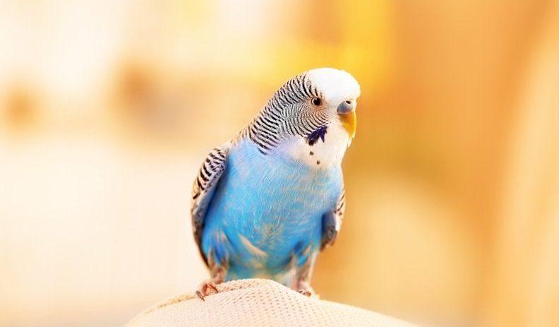 Vogel einfangen – 5 Tipps