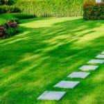 optimal gepflegter Rasen