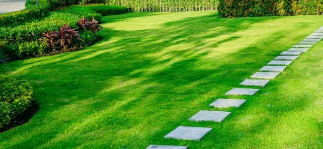 Rasenpflege im Frühjahr: Schritt-für-Schritt-Anleitung