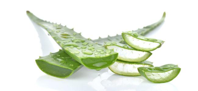 Aloe-Vera-Gel selber machen: Rezept und Anleitung