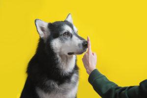 Mensch zeigt Hund, dass er still sein soll