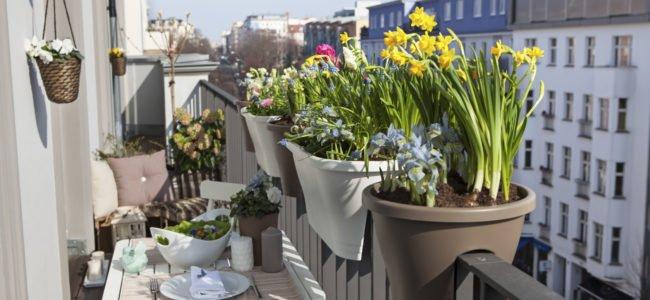 Balkonpflanzen für den Schatten: Wir gedeihen auch auf einem dunklen Balkon