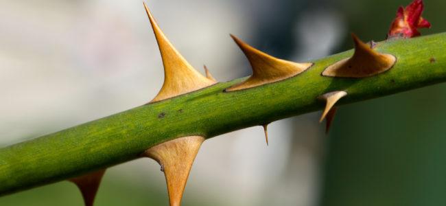 Können Splitter im Körper umherwandern?