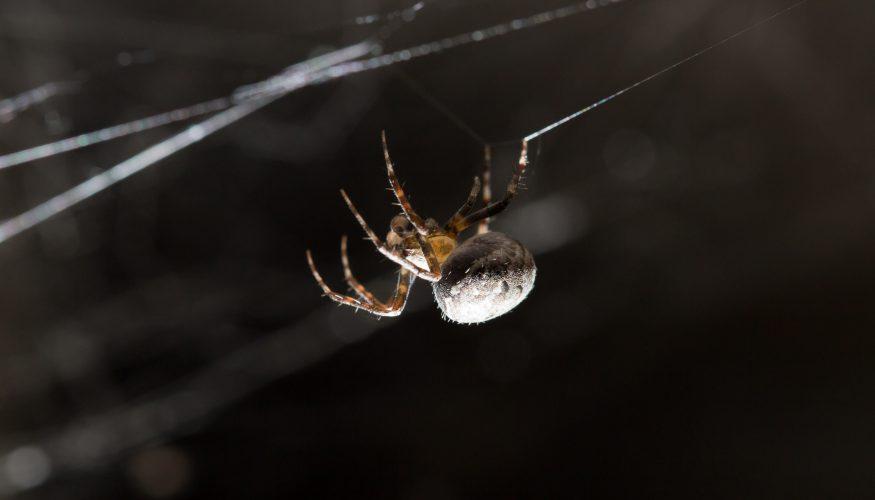 Spinnen entfernen – Tipps & Tricks!