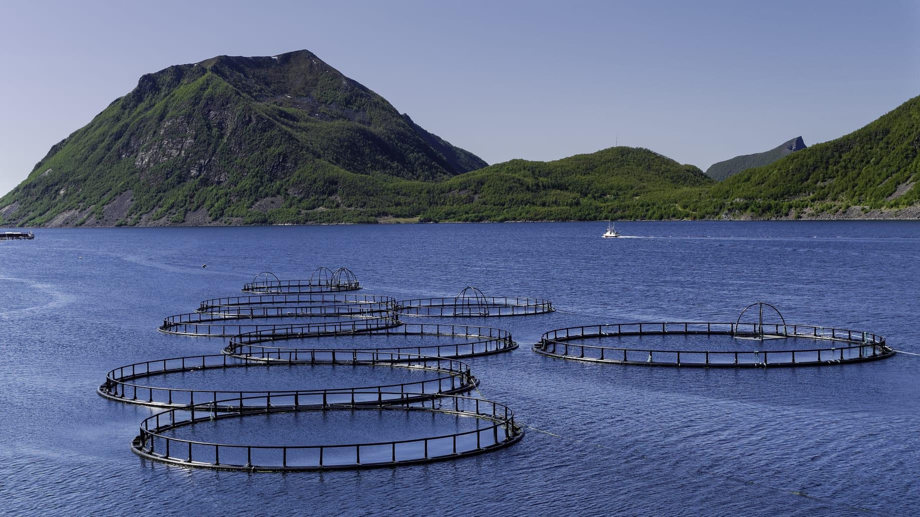 Fisch aus aquakulturen gute alternative zu wildfisch for Fische in teichen