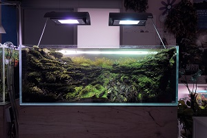 Aquarium ohne Deckel mit Beleuchtung.
