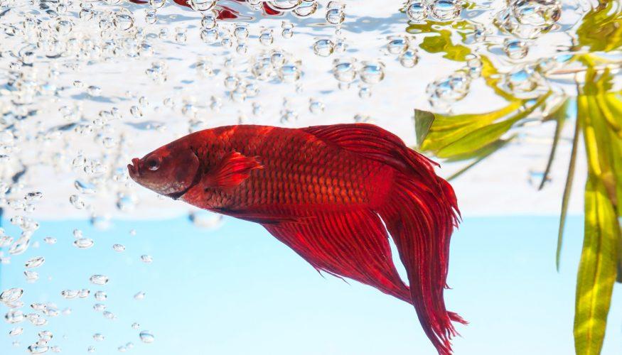 Aquarium dauerhaft vor Kalk schützen