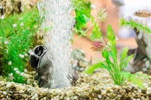 Aquarium mit Pflanzen und Deko.