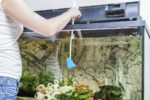 Frau beim Algen im Aquarium bekämpfen.