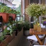 bepflanzter balkon