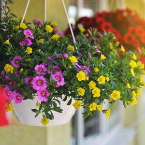 haengepflanzen auf dem balkon
