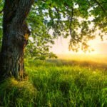 Baum auf weitem Feld