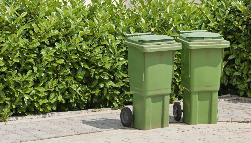 Biomüll entsorgen – Was gehört in die Biotonne?