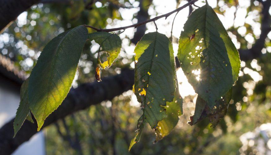 Blattläuse bekämpfen – 10 Tipps