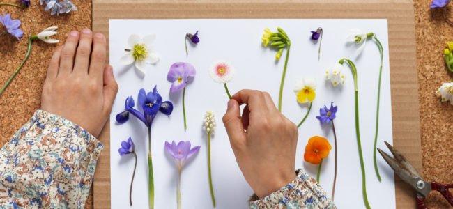 Blumen pressen – So geht's