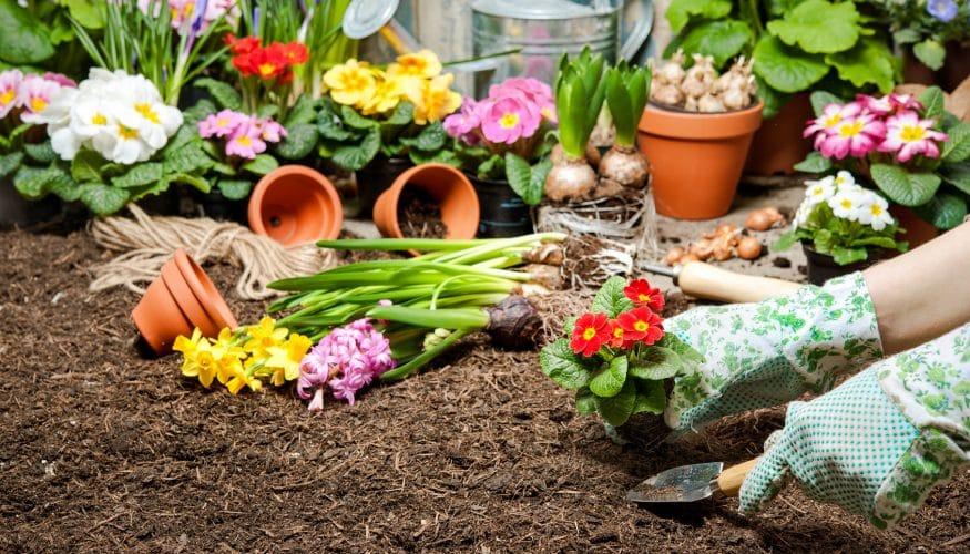 Blumenflecken entfernen – 8 Tipps & Tricks