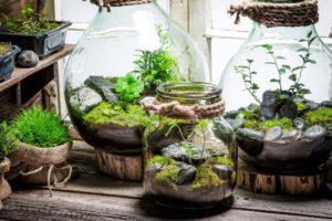 verschiedene glaeser mit pflanzen