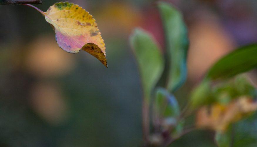 Eisenmangel bei Pflanzen – 3 Tipps zur Bekämpfung