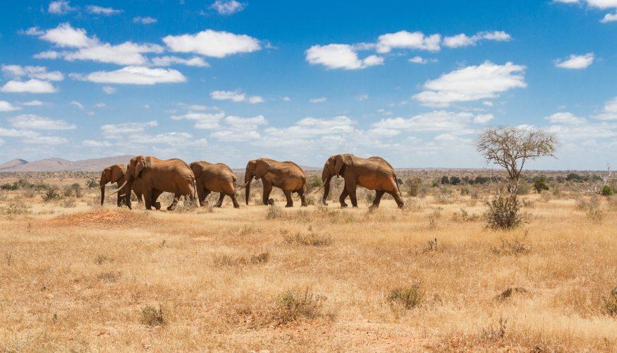 Haben Elefanten ein gutes Gedächtnis?