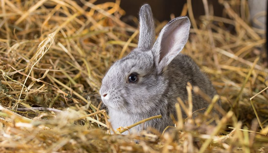 Erstarren Kaninchen aus Angst vor einer Schlange?
