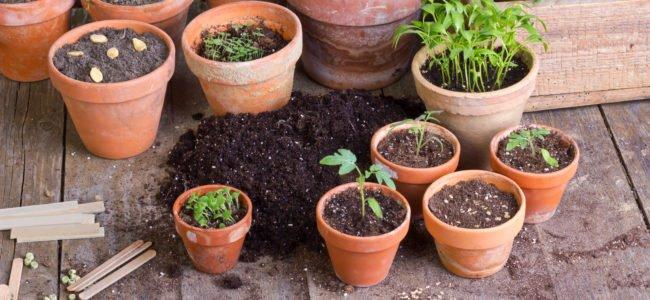 Fliegen in der Blumenerde – 6 Tipps die dagegen helfen