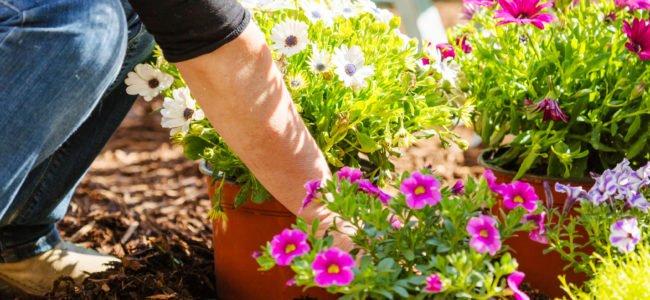 Garten anlegen – 8 Tipps & Tricks