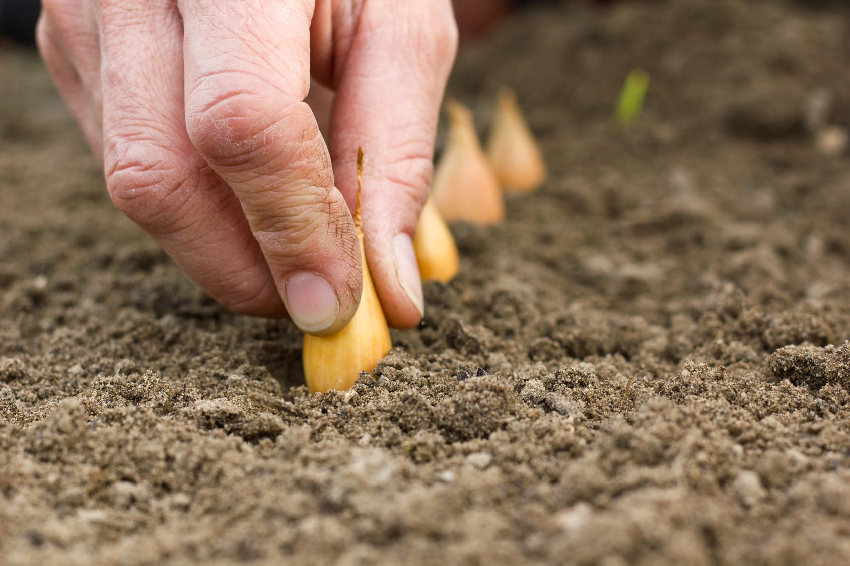 Gemüsebeet anlegen – Mit diesen 4 Schritten klappt's!