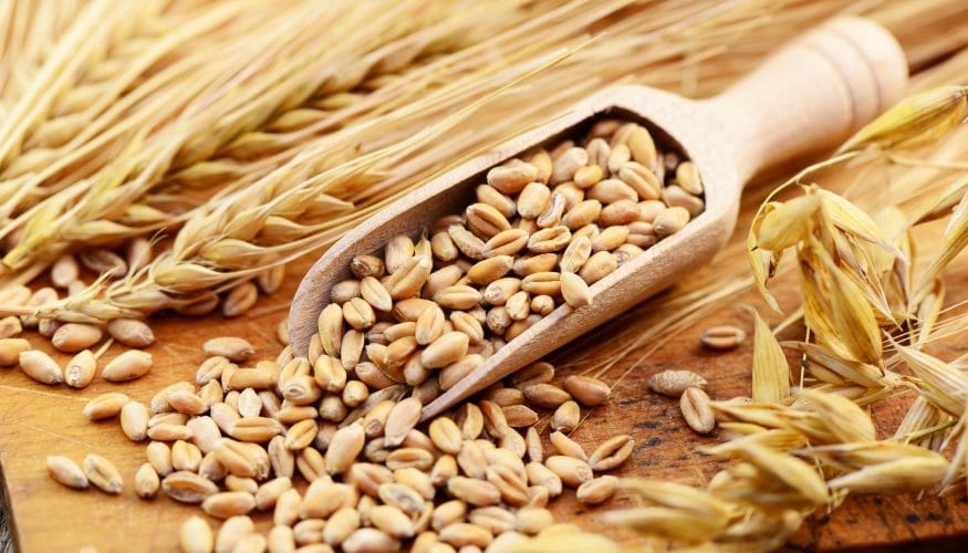 Getreidemühle – Langlebiges Spezialstahl-Mahlwerk