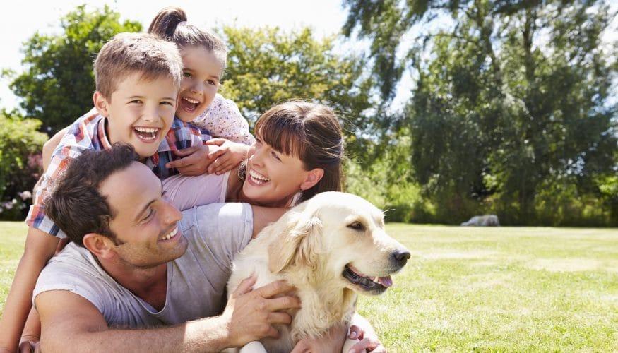Grasflecken entfernen – Mit diesen 7 Tipps klappt es garantiert!