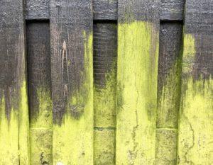 gruenspan giftig