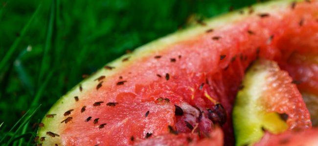 Hausmittel gegen Fruchtfliegen: Einfache Mittel im Überblick