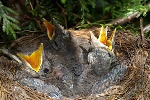Vogelnest im Sommer.