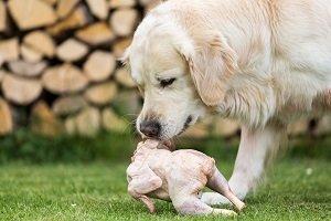 Hund mit Fleisch und Knochen.