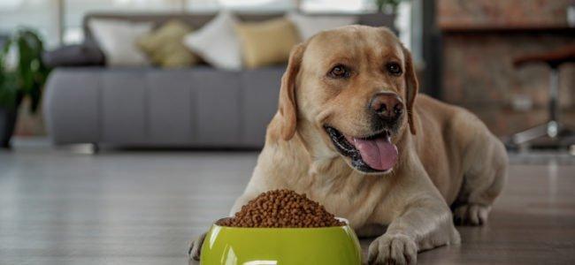 Gesund und lecker: Wie Sie Ihren Hund optimal ernähren