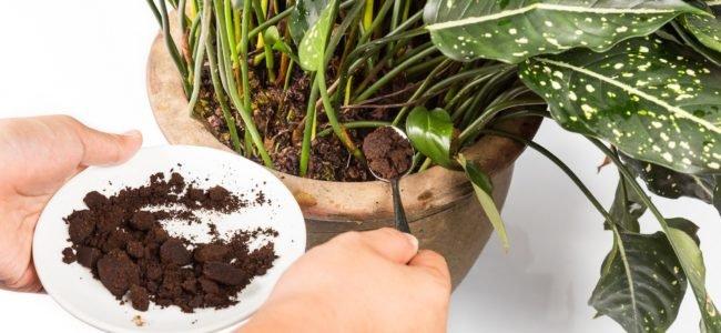 Kaffee als Dünger: Das kann das Haushaltsmittel